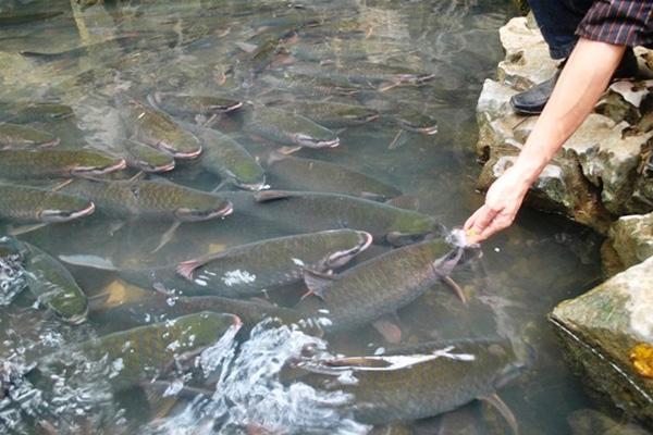 Suối cá thần ở Thanh Hóa