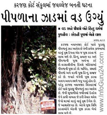 News : Pipala Na Jad Ma Vad Ugyu - www.InfoGuru24.com