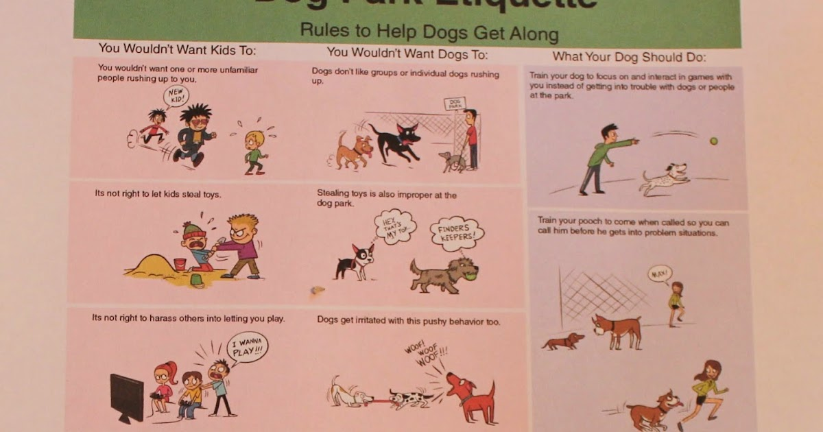 Carol The Dog Trainer Ottawa