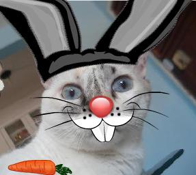 Gata Lili fantasiada de coelho da páscoa