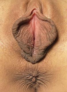 Sexy Hairy Pussy - rs-DominikaCButterfly_030510_020xxxl-724122.jpg