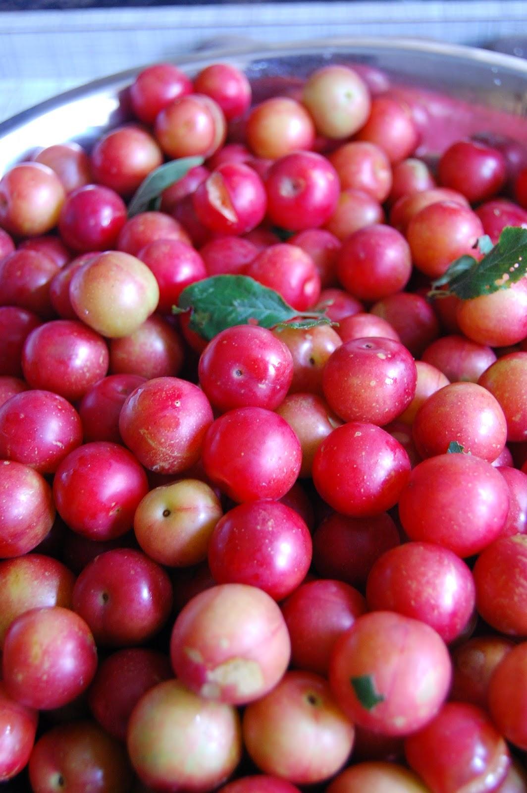 Wild cherry plum jam #lifeonpigrow