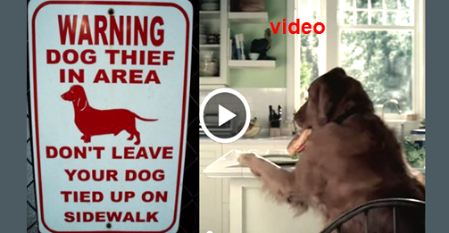 dog stealing food and blaming cat