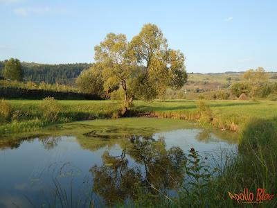 Lac pescuit Harghita