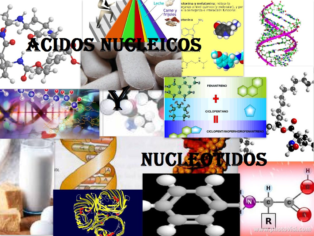 Funciones de los Ácidos nucleicos y nucleótidos