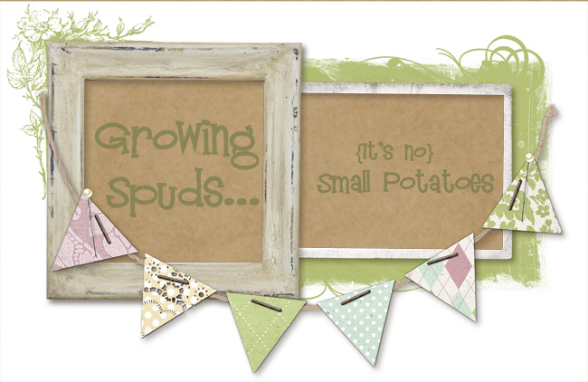 Growing Spuds---No Small Potatoes