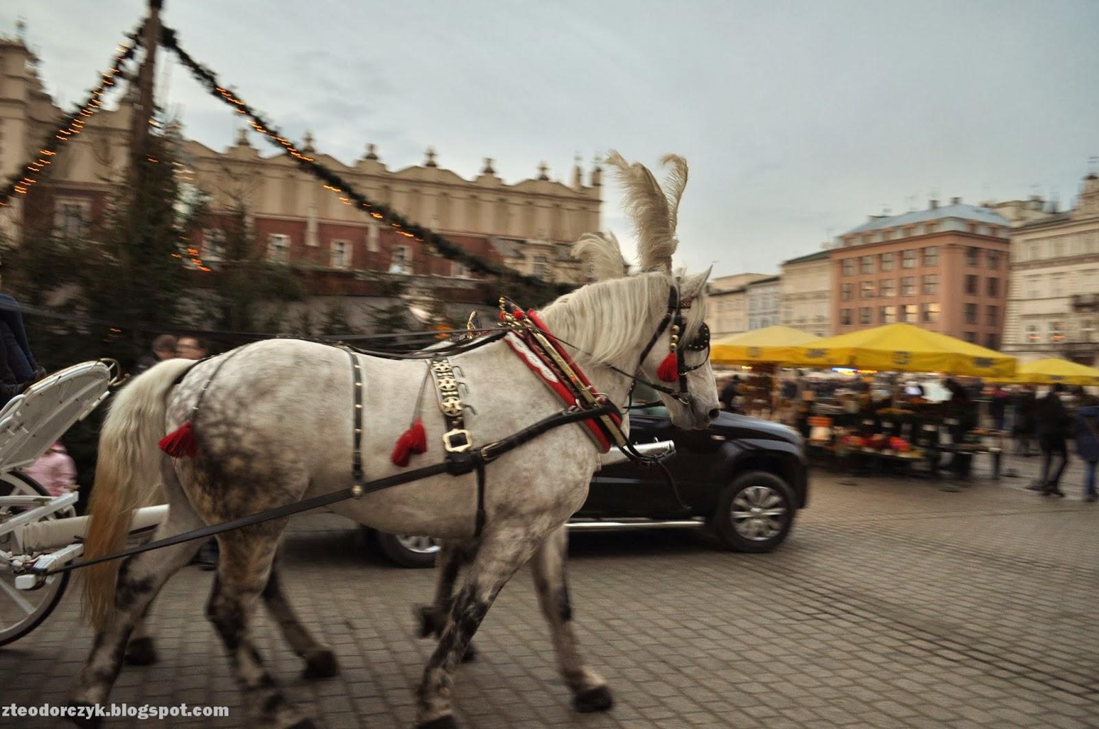 krakow, kraków, rynek, stare miasto, dorożka, konie, sukiennice, jarmark świąteczny