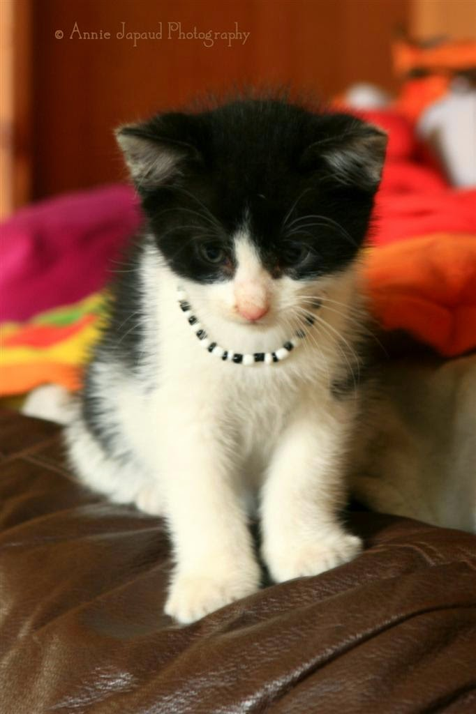 cute kitten with a necklace