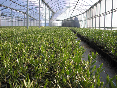 Blog profesor pedro godoy cedech lluta agricultura for Que es un vivero ornamental