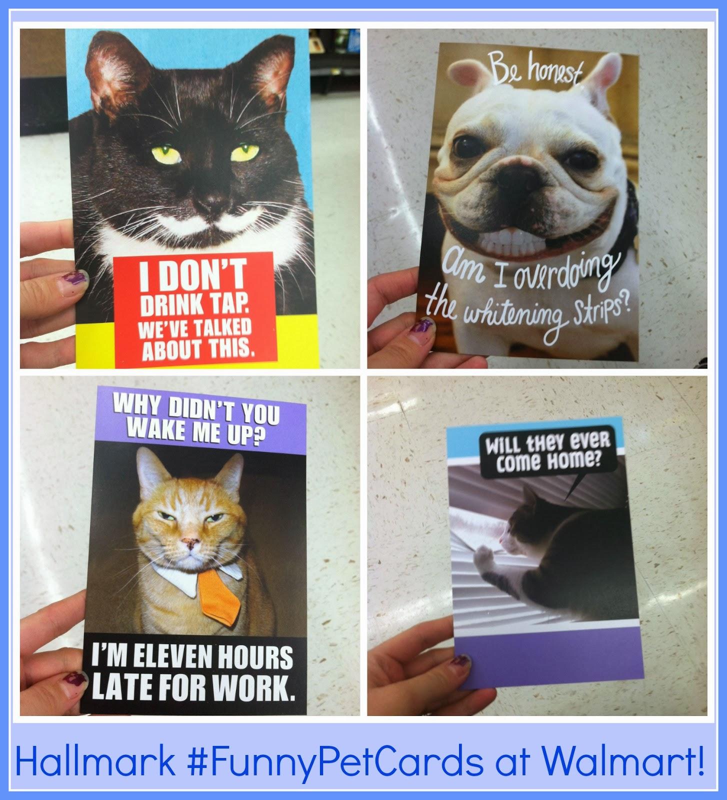 Hallmark #FunnyPetCards #shop