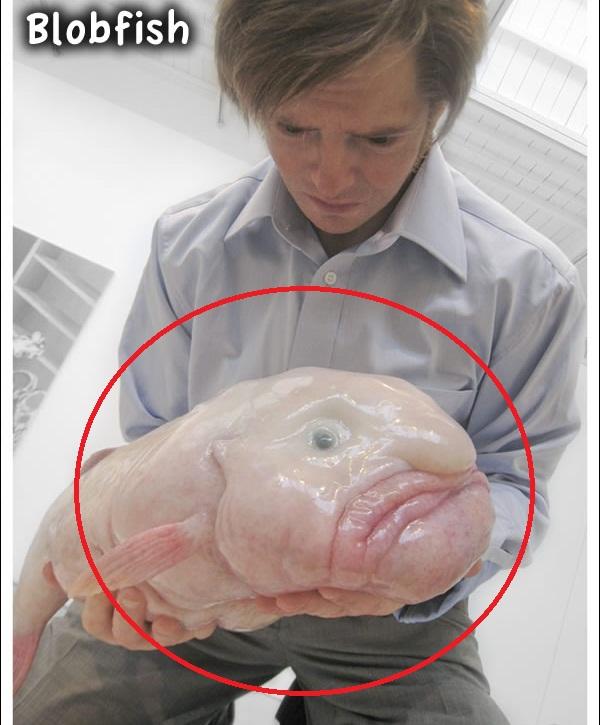 As criaturas mais estranhas do fundo do mar
