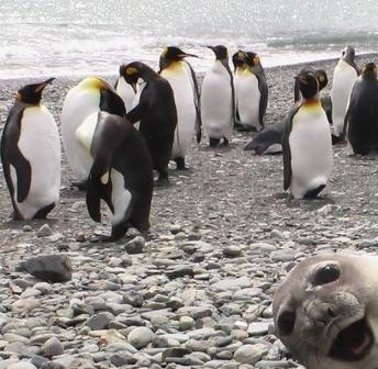 gambar hewan binatang lucu