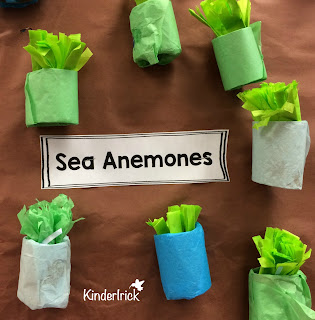 sea anemone craft and activity