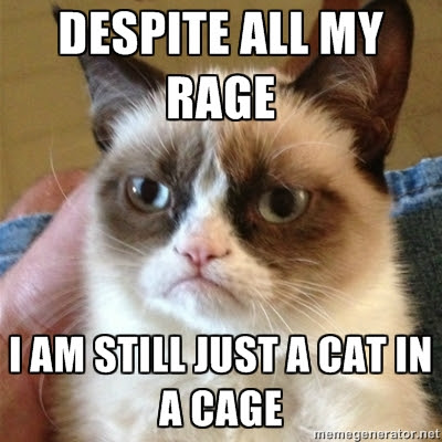 Funny cat pictures Despite All My Rage