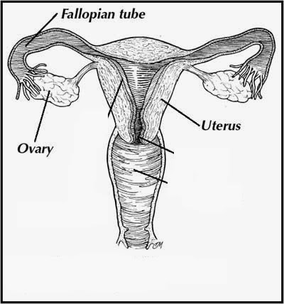 Cbse class x science sa2 question paper of 2014 with solutions b i the lining of uterus thickens and is richly supplied with blood to nourish the growing embryo ccuart Choice Image