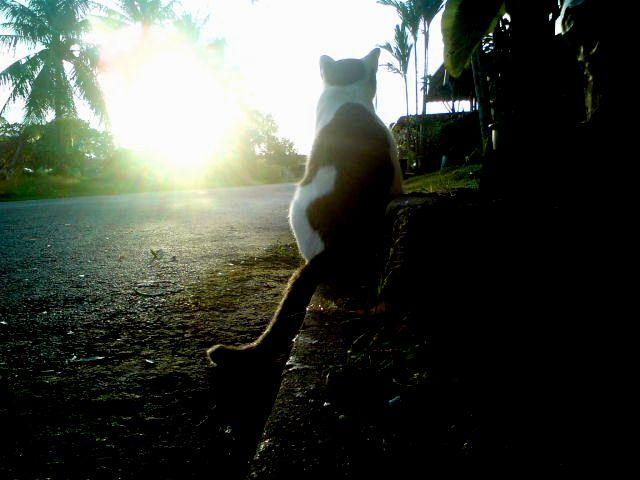 Si Kucing Yang Sepi