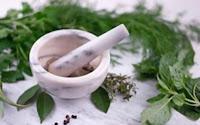 Hierbas Medicinales Para La Diabetes