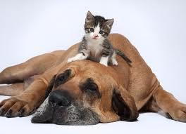 Imperdible duelo entre perro y gato