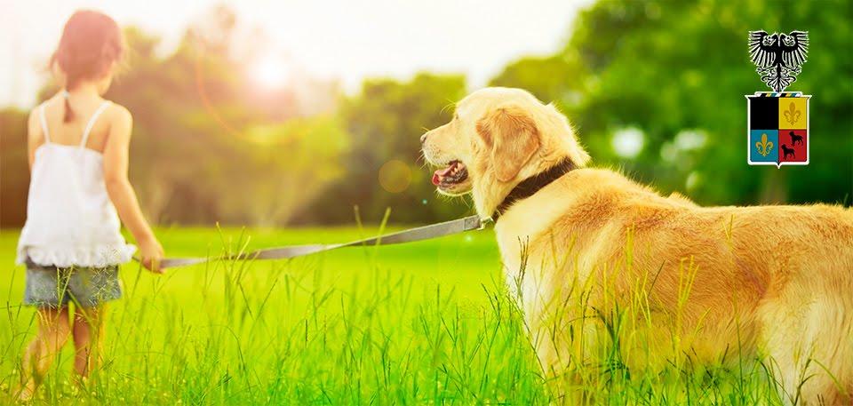 O Encantador Pet