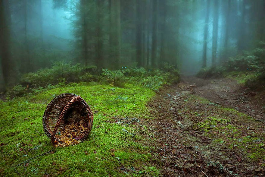 mysterious forests around the world-12