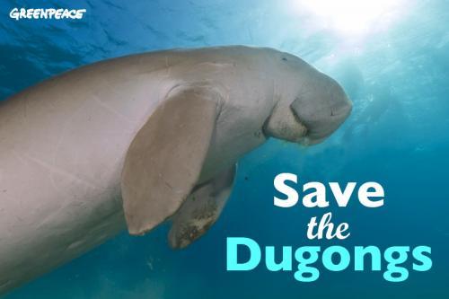 Dugong Duyung