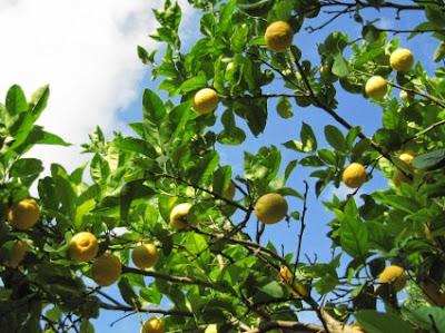 Ελληνικά λεμόνια