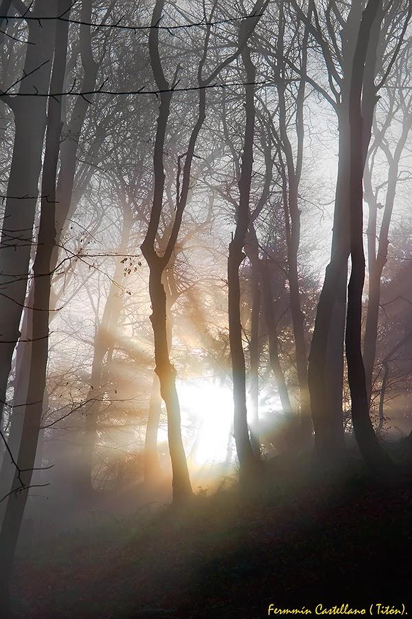 Niebla y hayedo