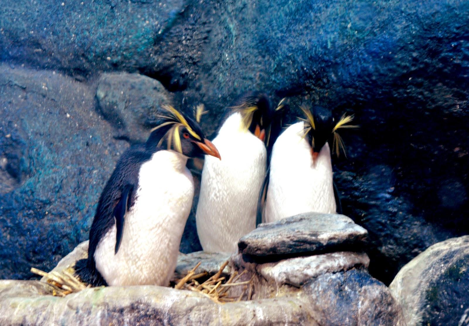 Underwater World Langkawi : Langkawi Ink.Com: Rockhopper : The Penguinarium Underwater World ...