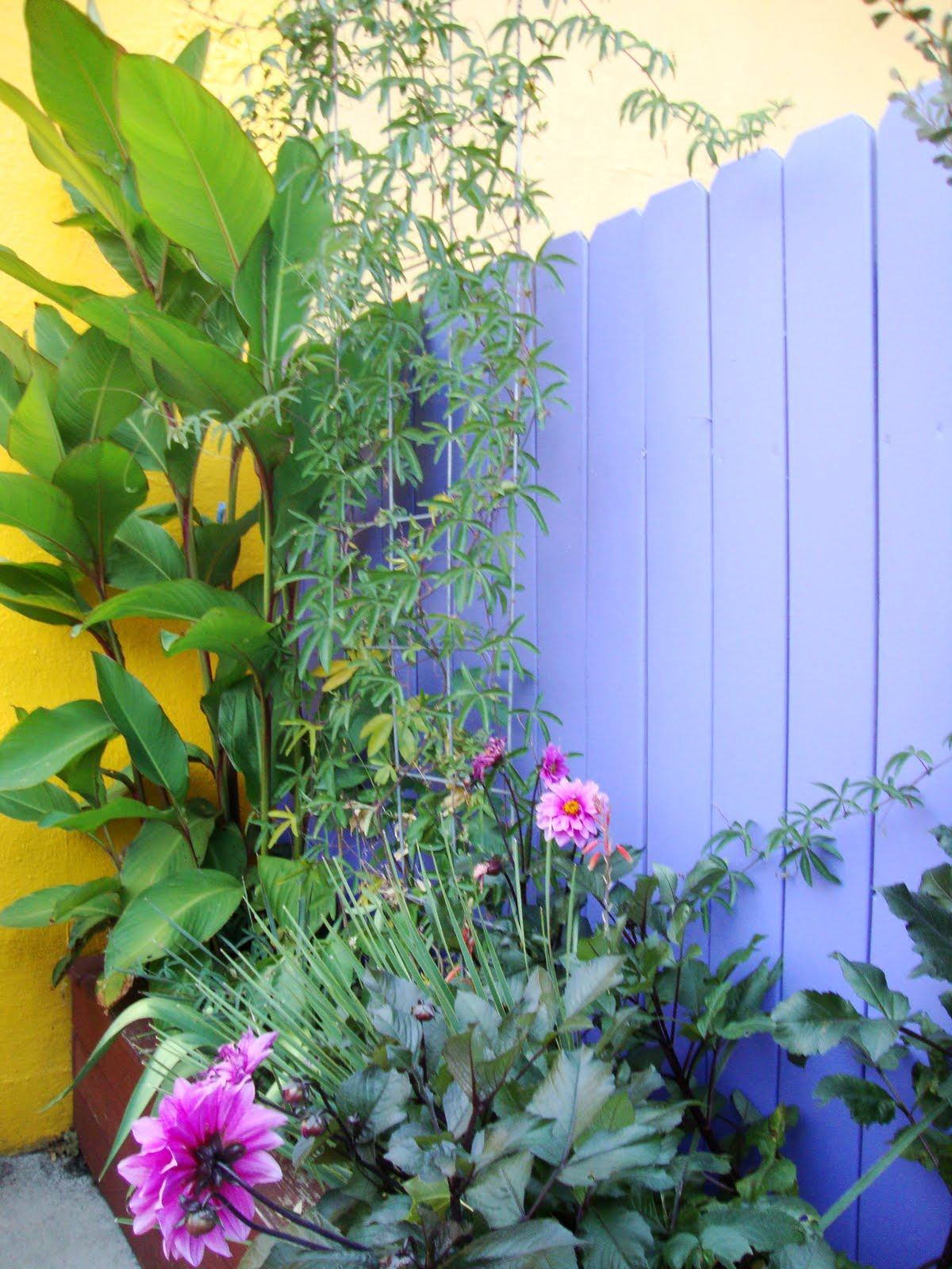 danger garden: I love a restaurant with a planted courtyard…