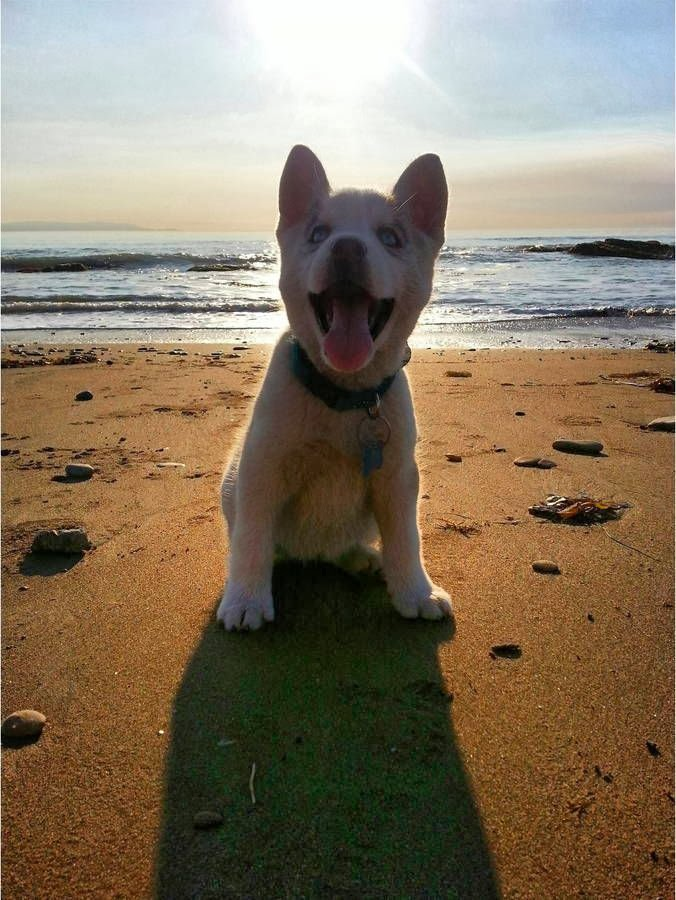 Cute dogs - part 7 (50 pics), puppy is happy being in the beach