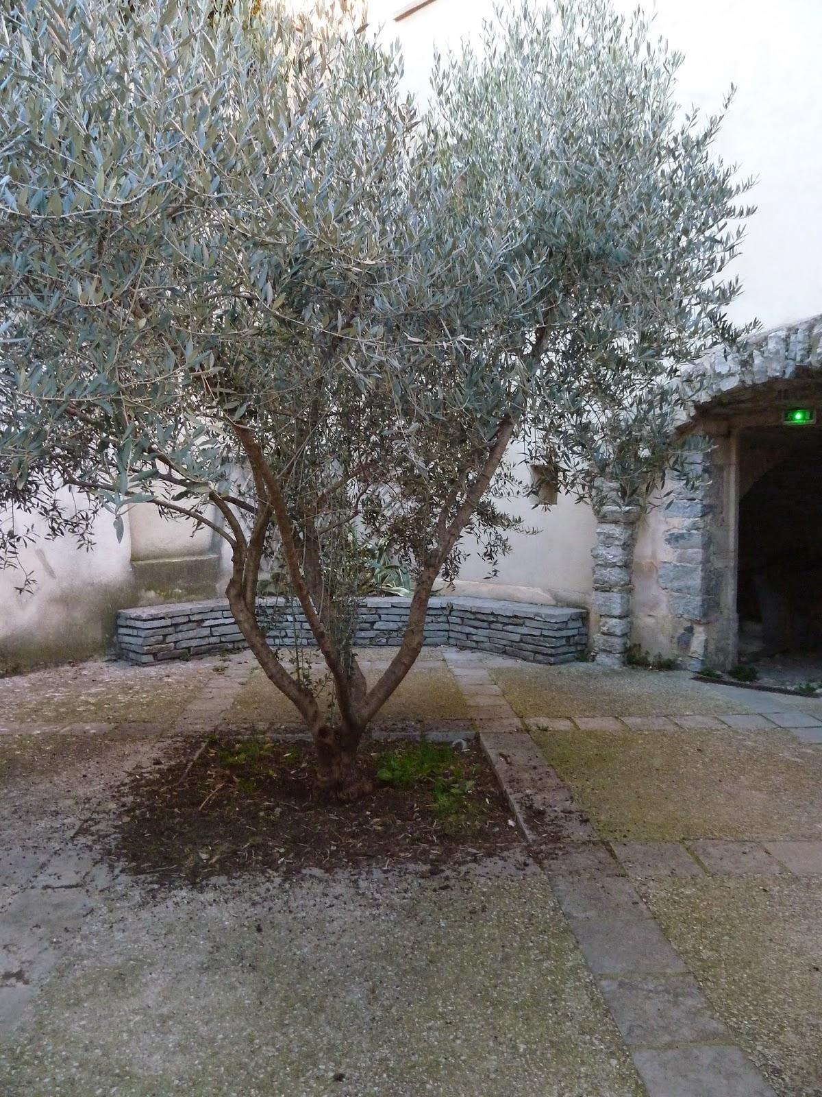 [CR] GTH34, de Bédarieux à Montpellier. Du 03 au 07 mars 2015. P1070085