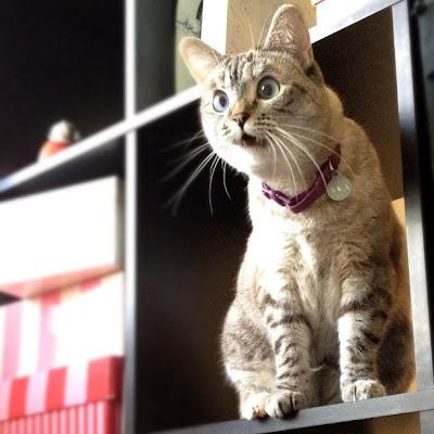 Foto Lucu Ekspresi Kucing Saat Kaget - raxterbloom.blogspot.com
