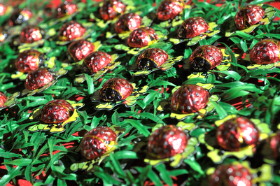 Jungle Safari Ladybug Chocolates