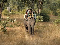 Tiger tracking on elephant-back