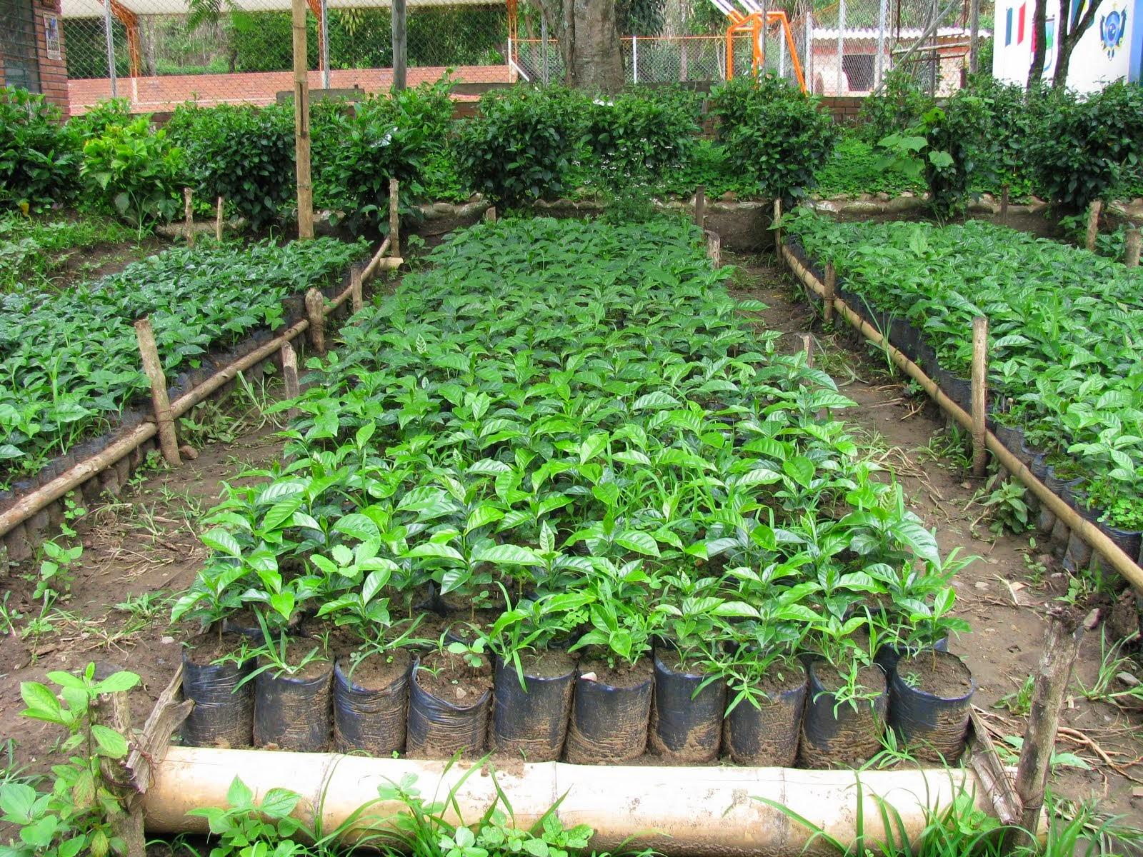 Noticias en linea de tabasco 07 26 14 for Plantas que hay en un vivero