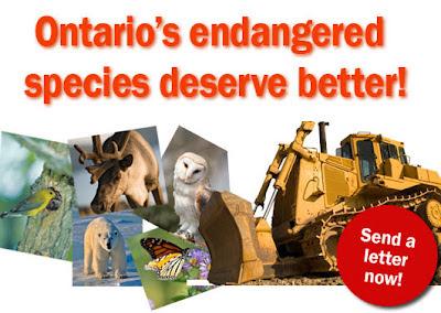 Ontario's Endangered Species Deserve Better