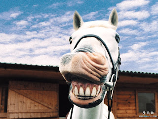 Funny Laughing Horse