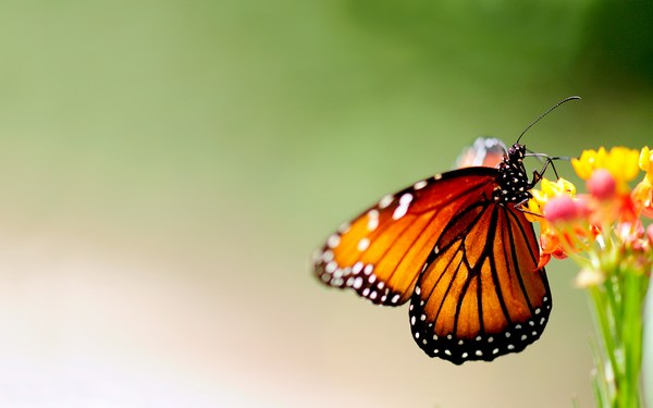 Beautiful Butterfly Pictures Download Free HD