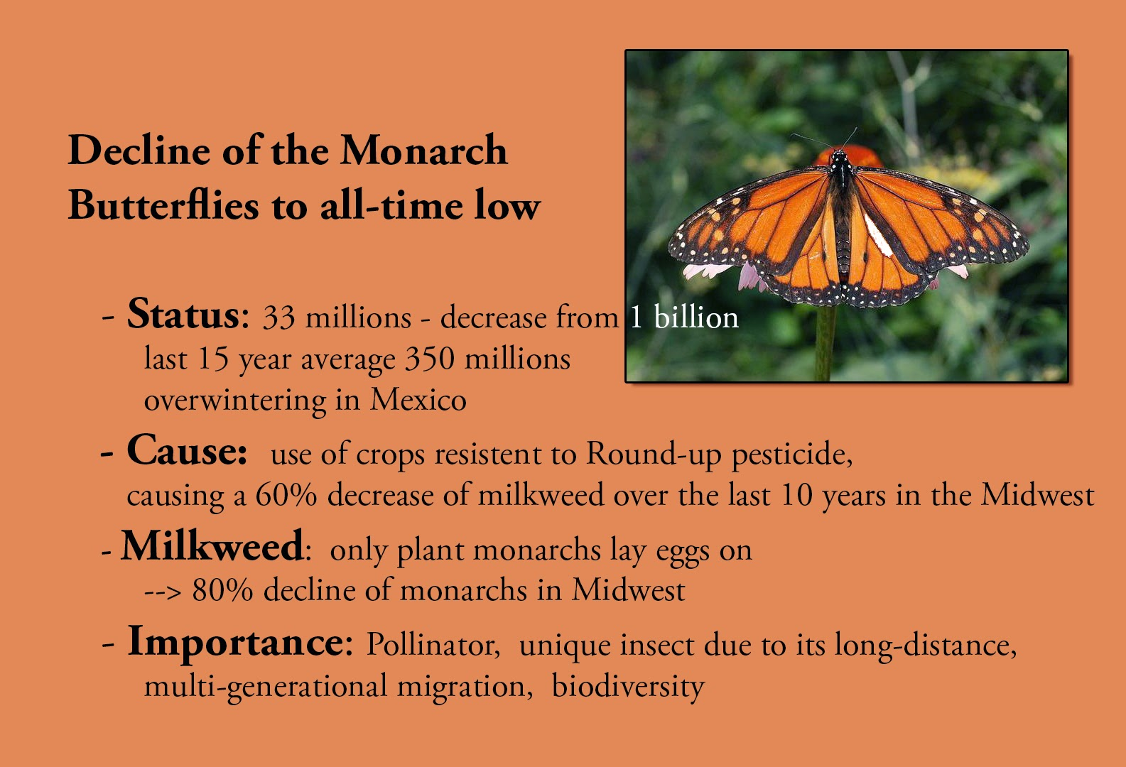 M. Raeder - Photography: Monarch Butterflies in Crisis
