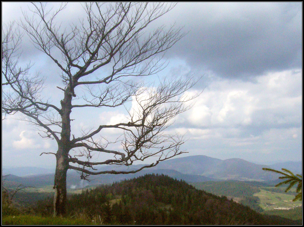 Карпатские горный пейзаж