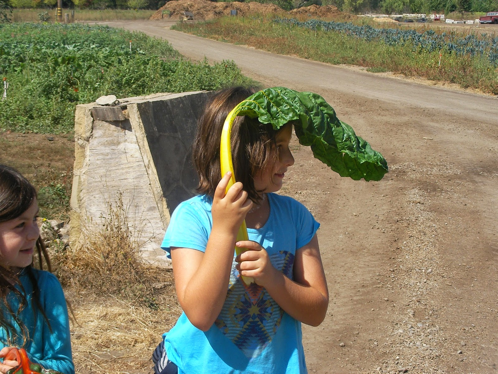 San Francisco Waldorf School: Urban Farm and Garden Blog
