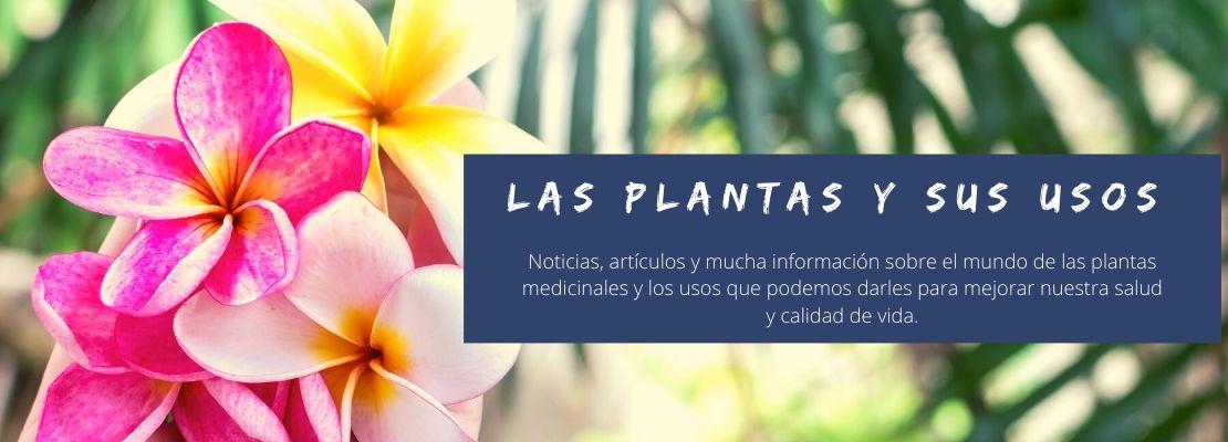Las plantas y sus usos