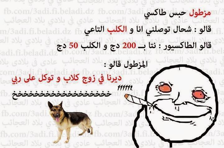 المزطول والكلب 10945518_34809172873