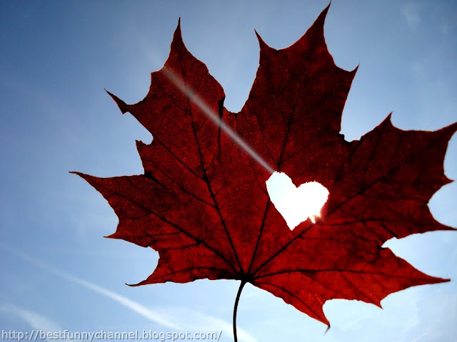 Leaf from hearts.