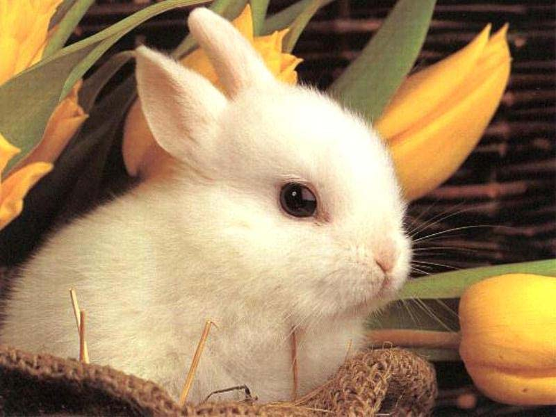 Cute Rabbits Rica Rica Wallpapers: ...