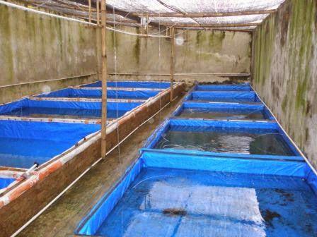 kolam ikan lele