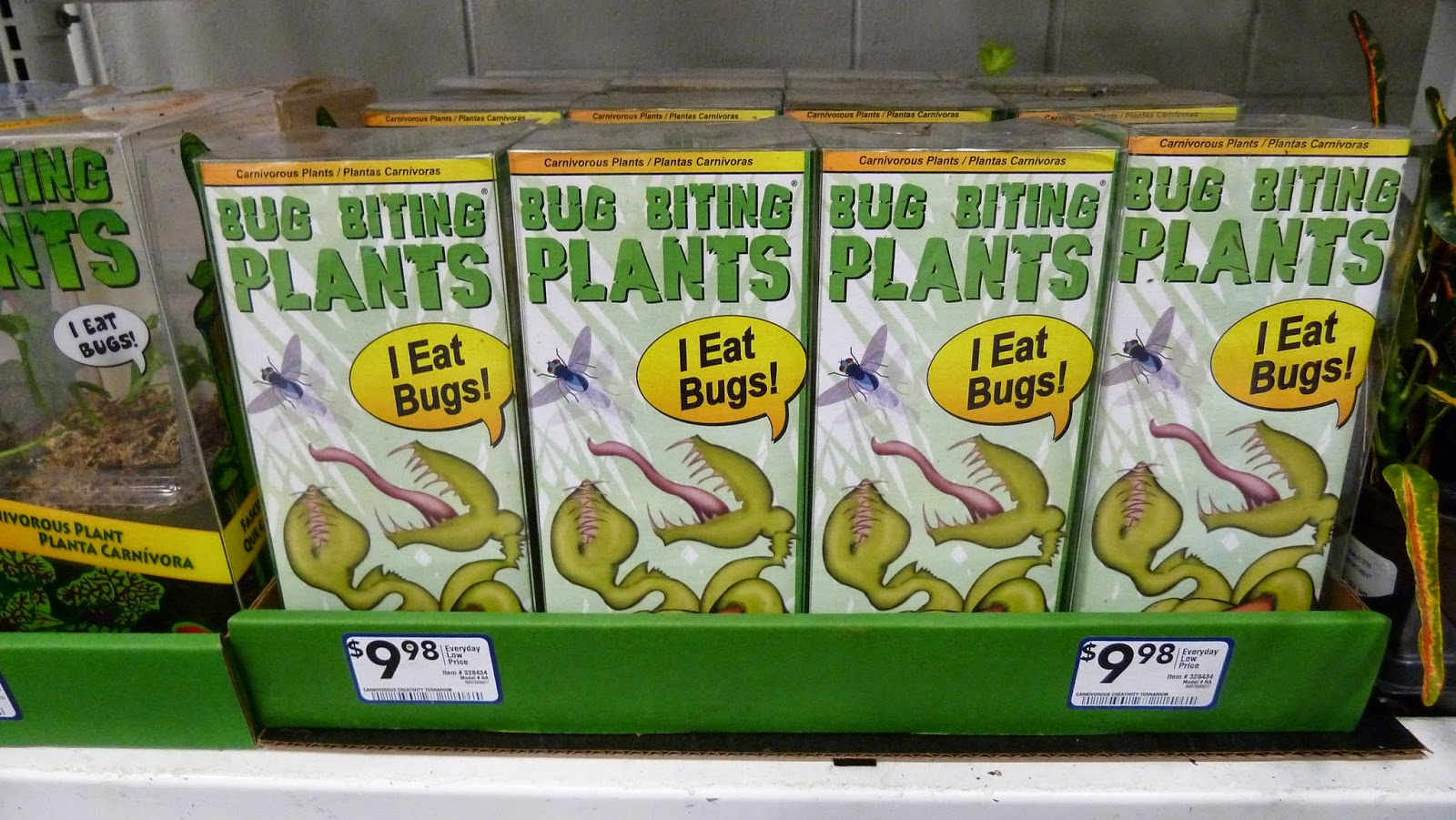 Hooray Plants Bug Biting Plants Terrarium Kit From Lowe S