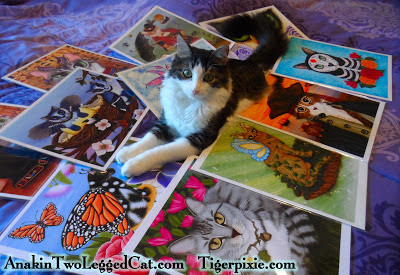 www.Tigerpixie.com Holiday Art Sale, Anakin The Two Legged Cat