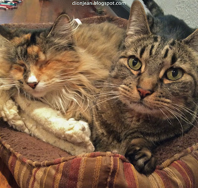 Two cats sharing one cat bed