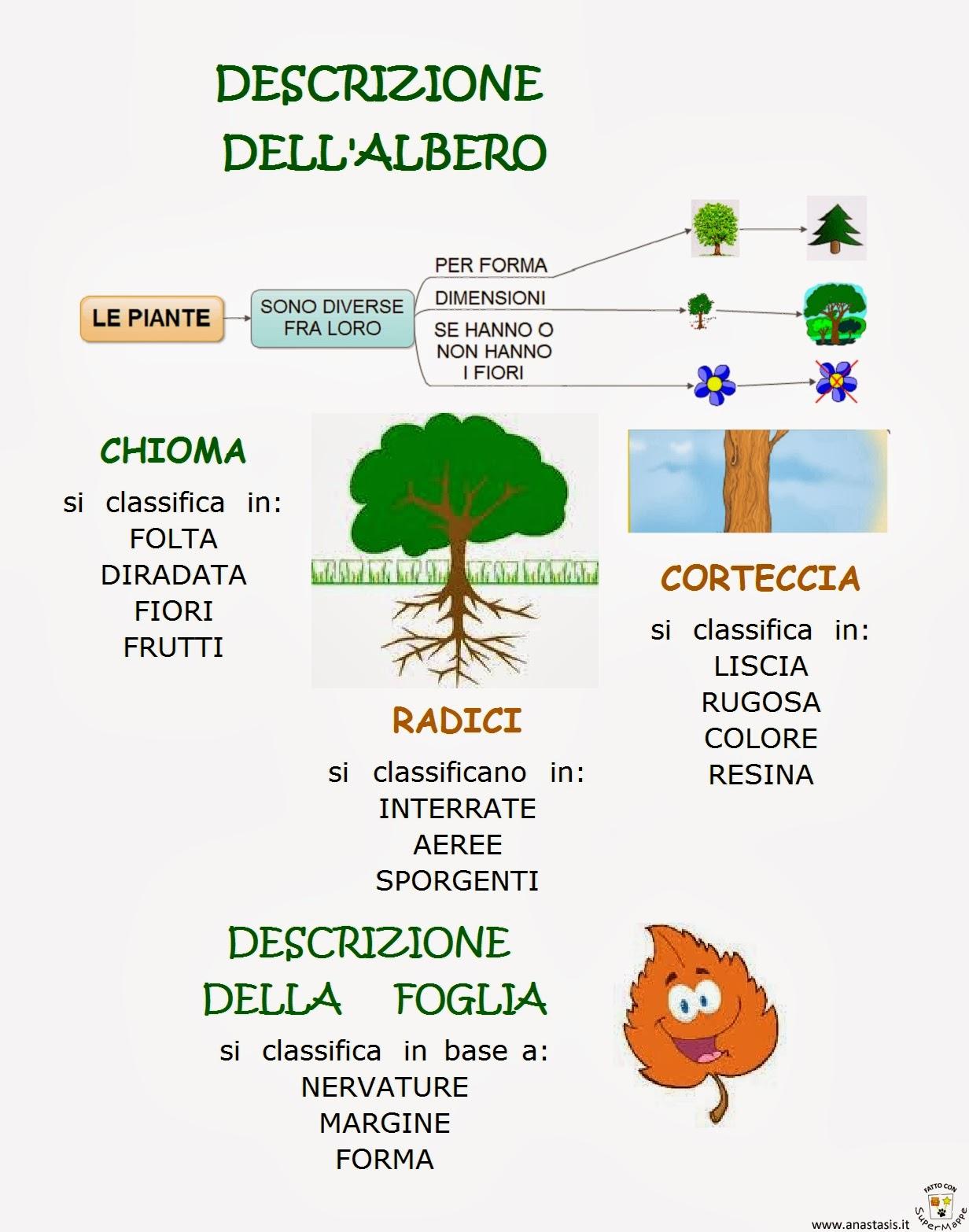 Paradiso delle mappe descrizione albero e foglie - Modello di foglia per bambini ...